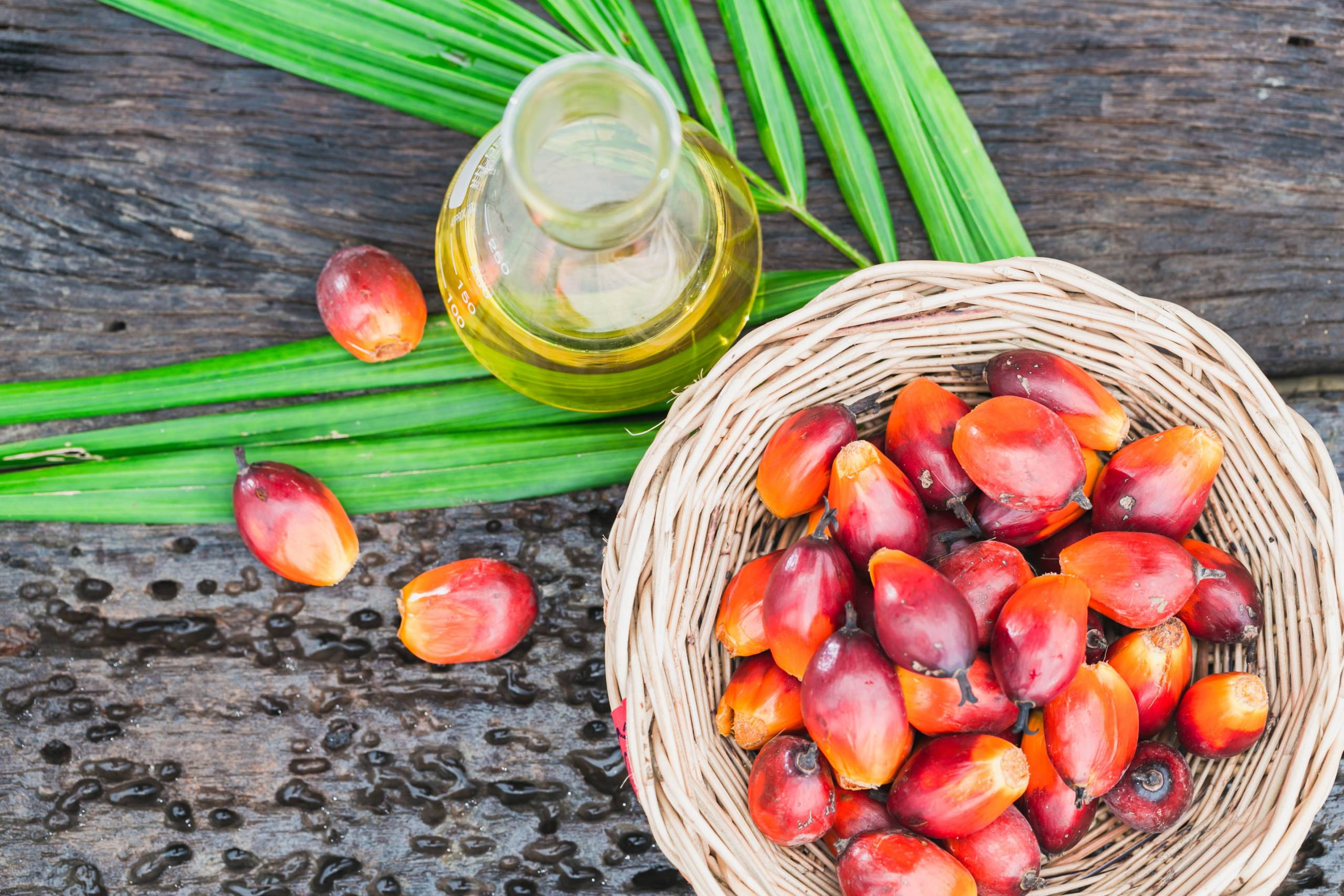 Grasimi vegetale de palmier